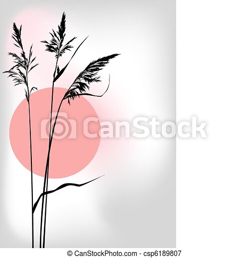 reed at sunset - csp6189807