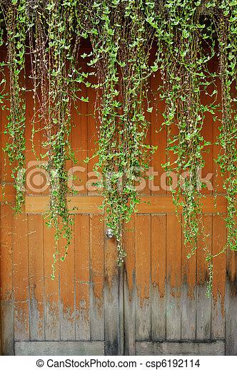 antigas, sobre, heras, PORTA, verde - csp6192114