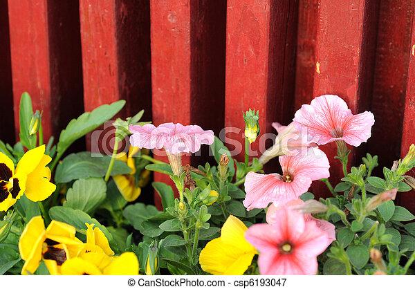 Blooming flowers in spring - csp6193047