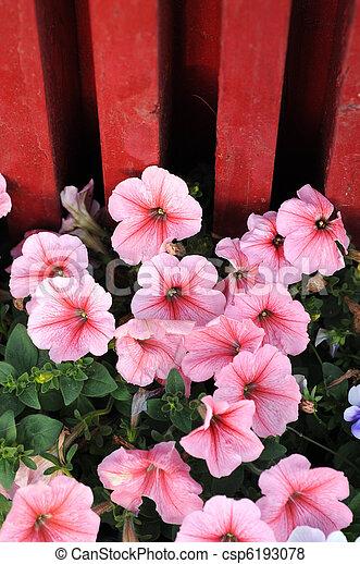 Blooming flowers in spring - csp6193078