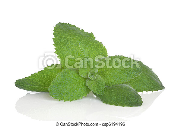 Lemon Balm Herb - csp6194196