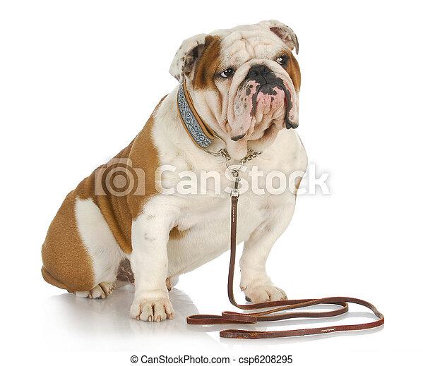 dog on a leash - csp6208295