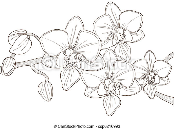 twig of orchid   - csp6216993