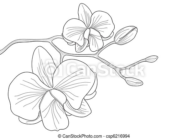 Orchid Line Drawings Vector Orchid Flower