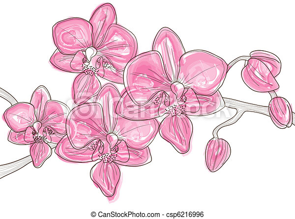 twig of pink orchid   - csp6216996