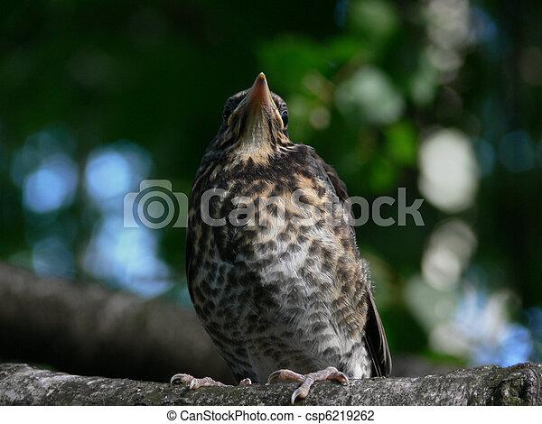 Bird. Nestling. - csp6219262