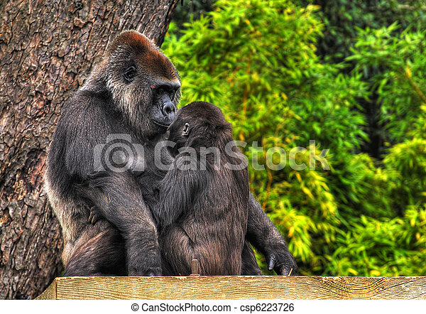 An HDR image of a mother and baby gorilla looking tenderly into eack others eyes - csp6223726