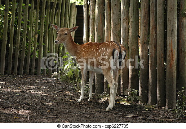 Mammal in  zoo - csp6227705