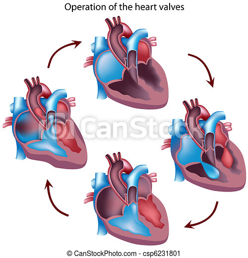 Heart valves operation - csp6231801