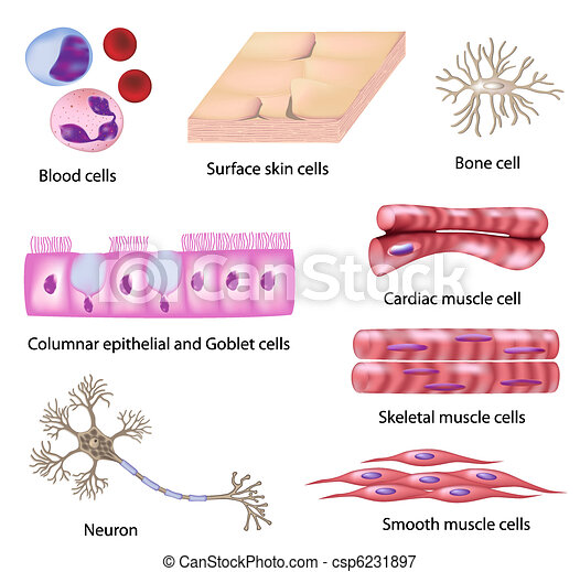Human cell collection - csp6231897