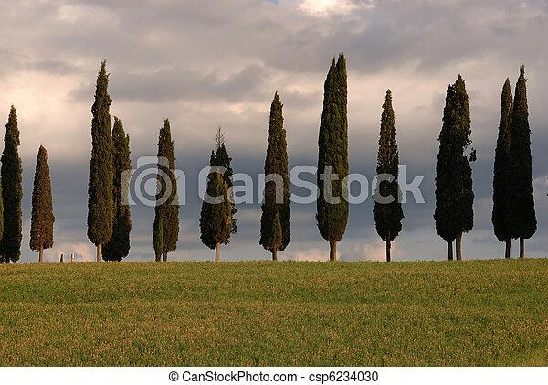 Tuscany - csp6234030