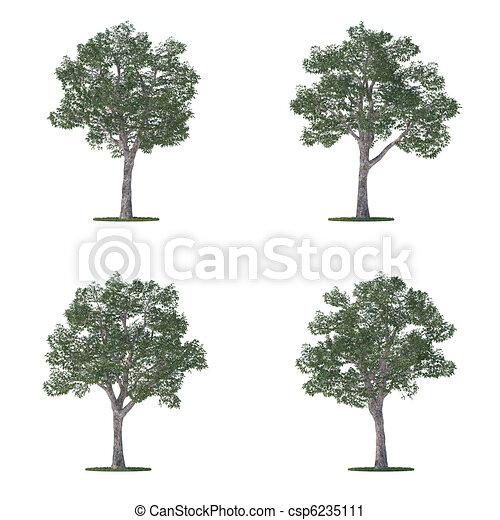 platanus trees collection isolated on white - csp6235111