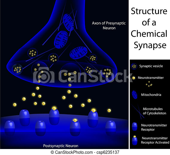 Structure of a synapse - csp6235137