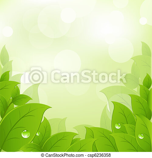 Fresh And Green Leaves - csp6236358