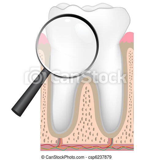 anatomy of a human tooth - csp6237879