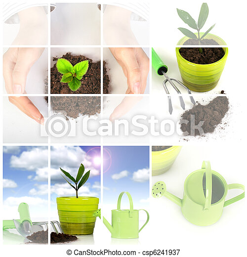 Plant with garden tools isolated over white. - csp6241937