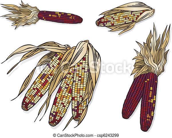 Indian Corn Drawing Indian Corn Vector Art in