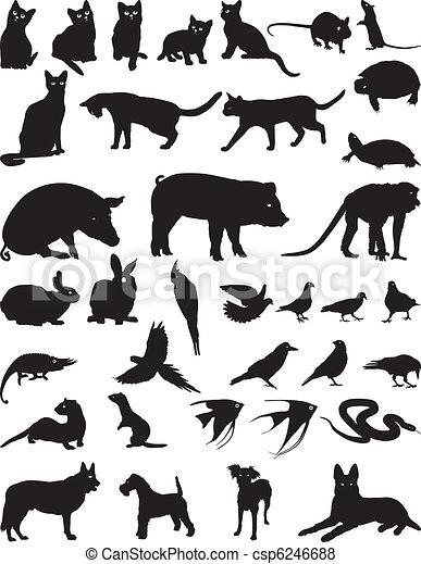 Animal pet - csp6246688