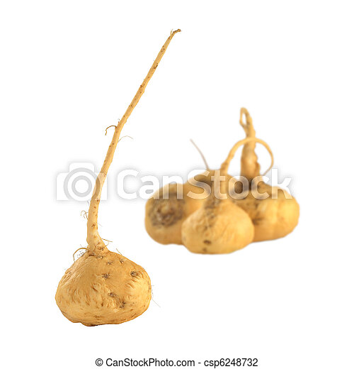 Peruvian Ginseng (Sp. Maca, lat. Lepidium meyenii) which is widely used in Peru for its various health effects and high nutritional value (Isolated) (Selective Focus, Focus on the root in the front) - csp6248732