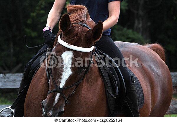 Portrait of a dressage horse - csp6252164