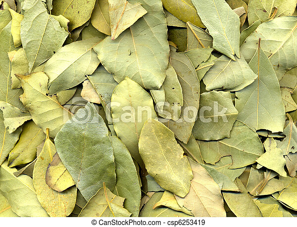 Laurel Leaf Texture - csp6253419