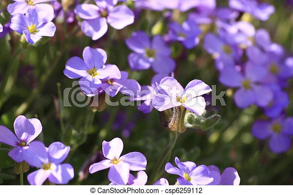 Perennial plants  - csp6259112