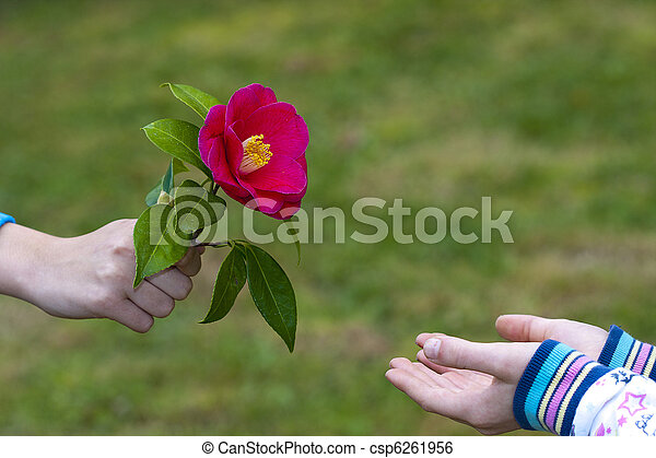 hands of children giving flowers as a symbol of friendship and love - csp6261956