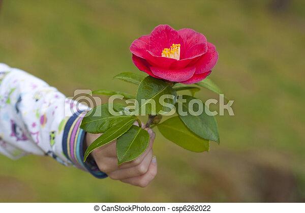 photo de mains de enfants donner fleurs comme a symbole de csp6262022 recherchez. Black Bedroom Furniture Sets. Home Design Ideas