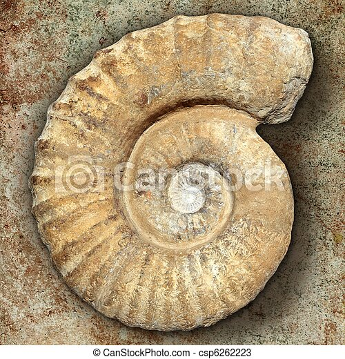 fossil spiral snail stone real ancient petrified shell - csp6262223