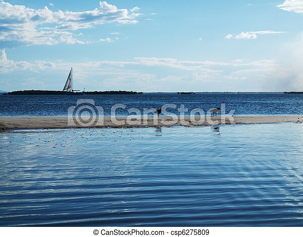 Sailboat on horizon over sand spit with birds and water. - csp6275809
