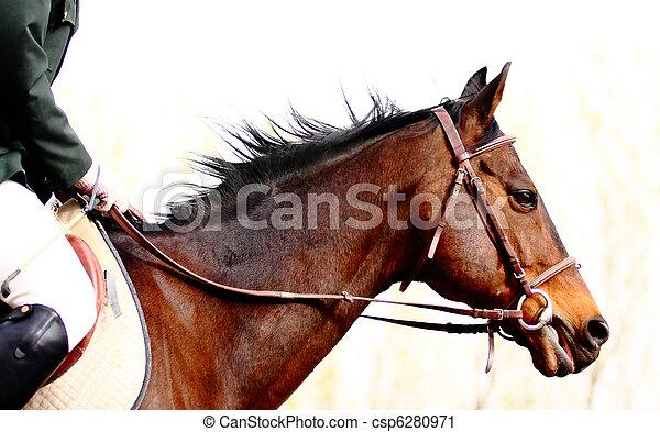 Dressage horse - csp6280971
