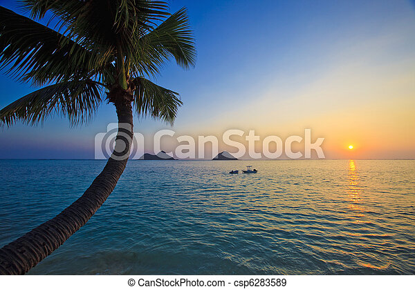 pacific sunrise with palm tree, - csp6283589
