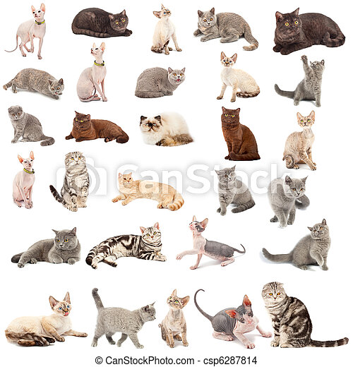 Collection of a cats - csp6287814