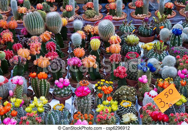 Kleine cactus kopen