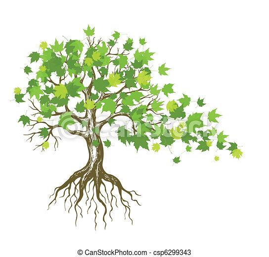 Maple Tree Drawing Vector Maple Tree