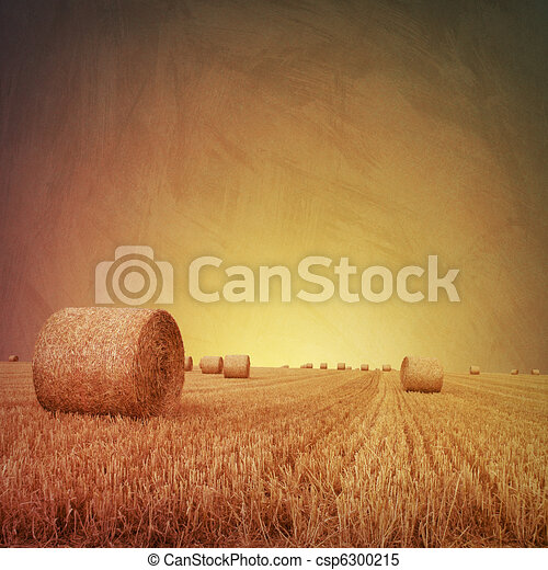 Straw Bales - csp6300215
