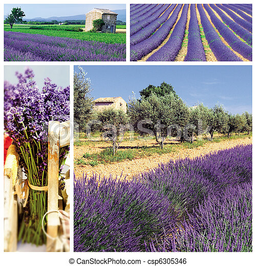 lavender in the south french - csp6305346