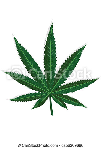Clip art vecteur de cannabis feuille sur a blanc fond depicts a vert csp6309696 - Feuille cannabis dessin ...