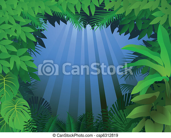 Tropical rain forest - csp6312819