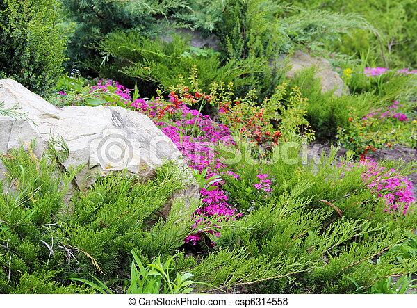 Coniferous Plants Garden - csp6314558