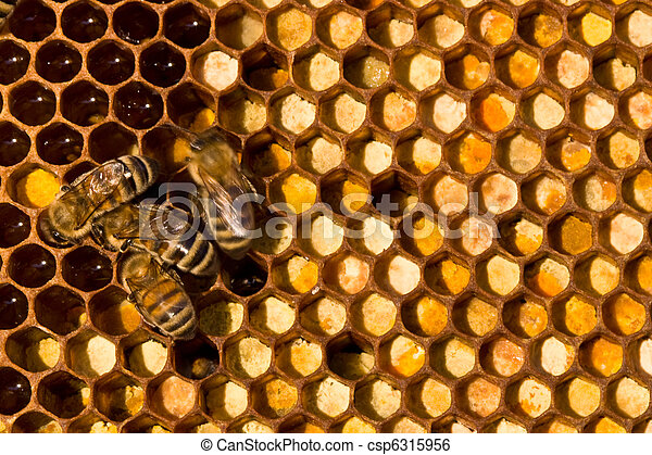 Life and reproduction of bees - csp6315956
