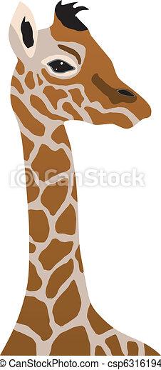 giraffe cub - csp6316194