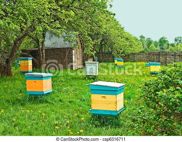 beehives - csp6316711