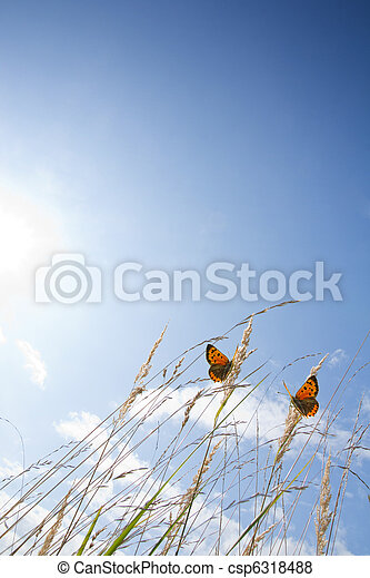 Schmetterlinge - csp6318488