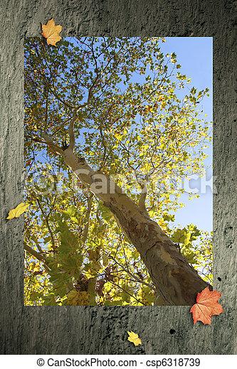 Herbst - csp6318739