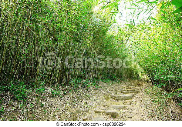 Green Bamboo Forest -- a path leads through a lush bamboo forest in Taiwan  - csp6326234