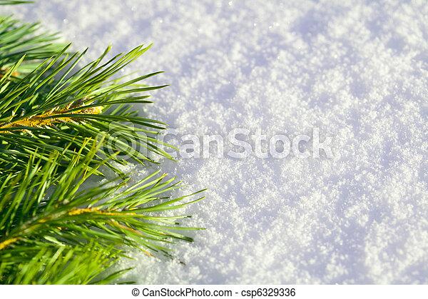 Pine needles on snow - csp6329336