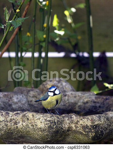 Great tit on bird bath - csp6331063