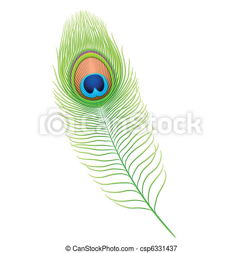 Illustrations vectoris es de paon plume d taill - Plume de paon dessin ...