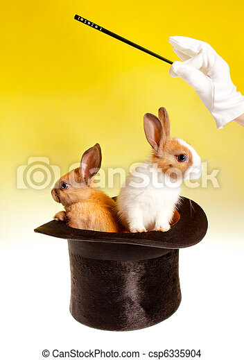 Double magic trick with rabbits - csp6335904